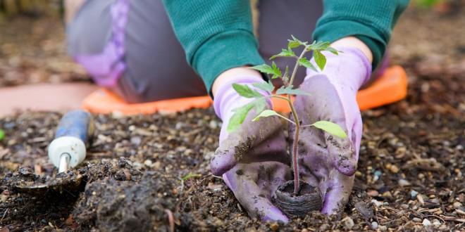Canone sui terreni ad uso civico, Pietraroja approva il primo regolamento