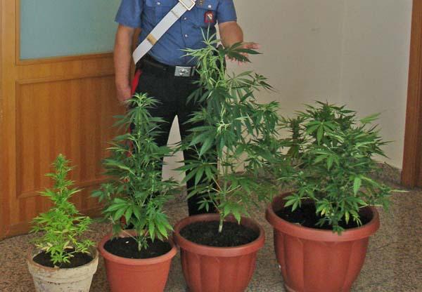 Marijuana coltivata sul balcone di casa, beccato disoccupato beneventano