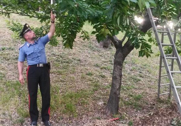 Cade da un albero di ciliegie in un convento, operaio muore sul colpo