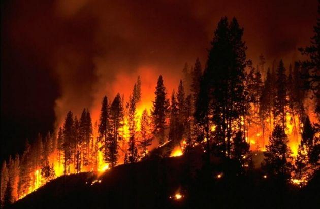 Incendi boschivi, vertice in Prefettura per la prevenzione e il contrasto
