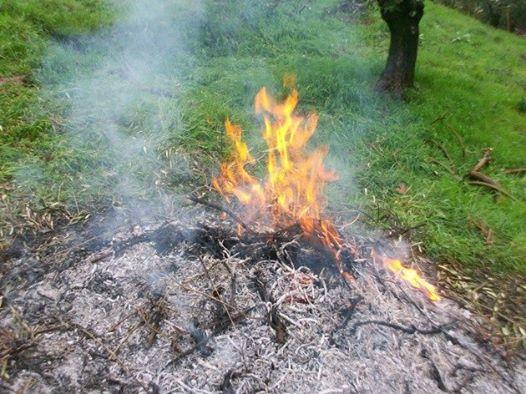 Coldiretti Benevento: la bruciatura delle ramaglie non è più reato