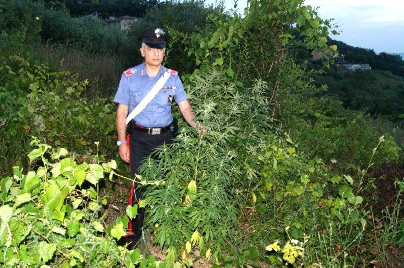 Carabinieri sorprendono uomo mentre innaffia la sua piantagione di cannabis. Arrestato