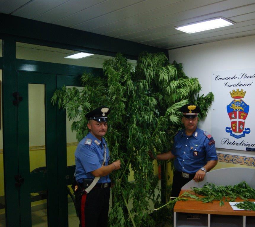 Pago Veiano, denunciato 29enne che coltivava marijuana nel pollaio
