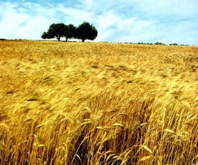 Agrifestival, appuntamento con il progetto 'I granai del Mediterraneo'