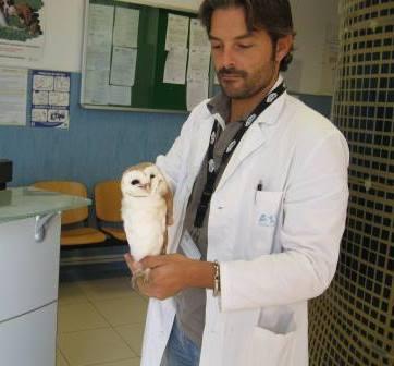 Falco Picchiaiolo e Barbagianni salvati dalla Polizia Provinciale