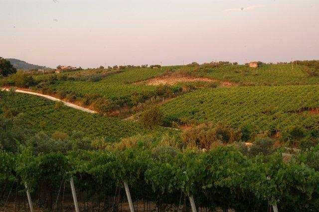 Raddoppio ferroviario tratta 'Frasso-Vitulano', opera a forte impatto su un territorio a vocazione vitivinicola