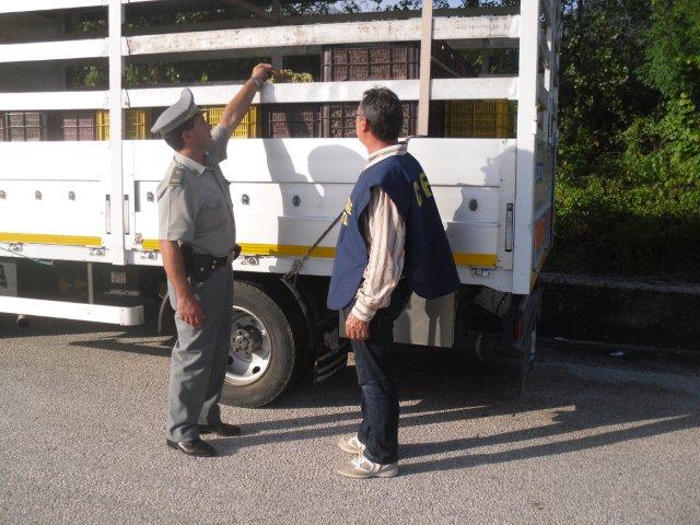 'Operazione Bulgara', la Forestale sequestra ottantamila bottiglie di vino contraffatte