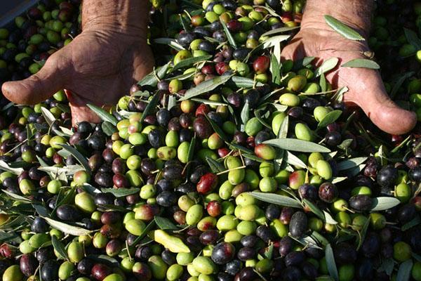 A Telese Terme il focus territoriale del PD sulla filiera vitivinicola e olivicola