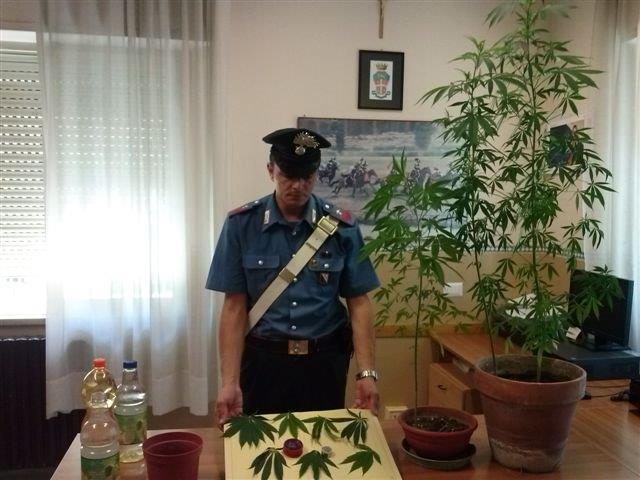 San Giorgio Del Sannio, coltiva cannabis sul terrazzo. Arrestato 41enne già posto a sorveglianza speciale