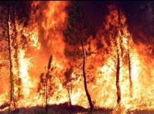 Prefettura, riunione di coordinamento per la prevenzione degli incendi boschivi