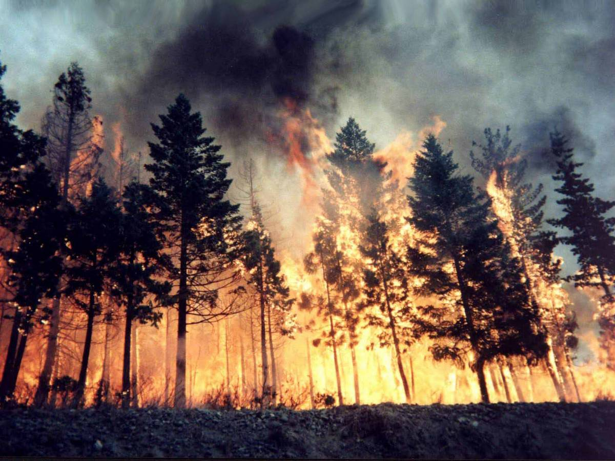Ad oggi sono sei gli incendi spenti dalle squadre dell'Antincendio Boschivo della Provincia