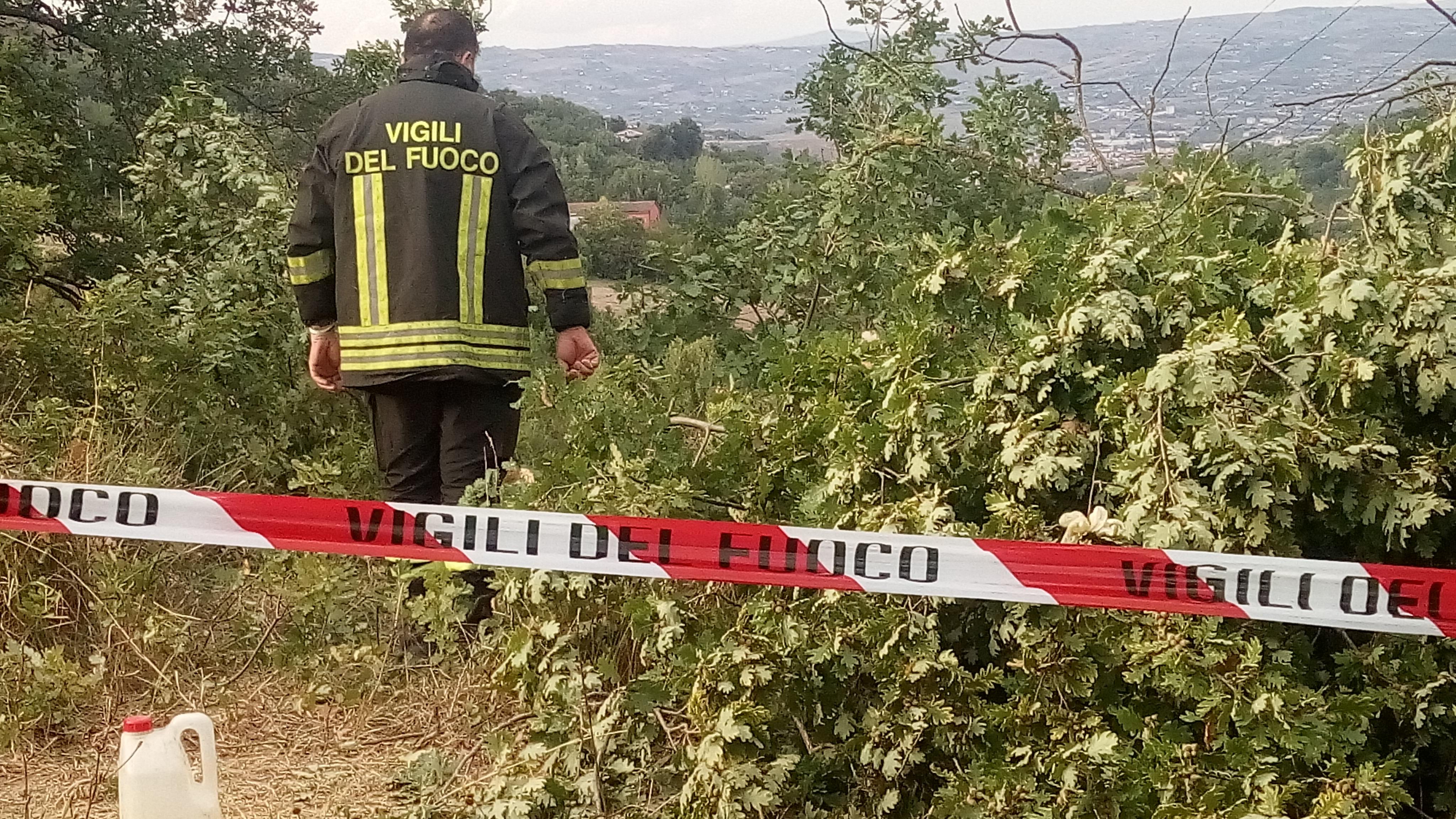 San Leucio del Sannio, uomo muore schiacciato da un albero