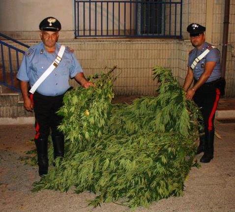 Durazzano, sequestrate armi e piante di marijuana ad un 46enne del luogo