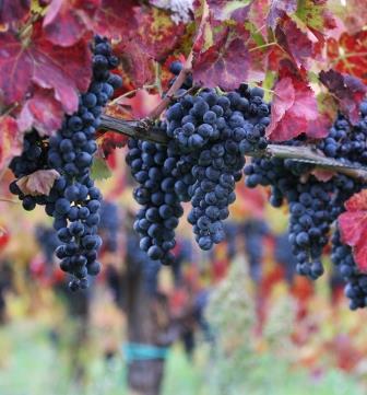Passo indietro della Ue sulla liberalizzazione dei nomi dei vitigni fuori dai luoghi di produzione