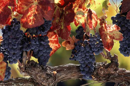 Pianificazione urbanistica per la viticoltura di qualità, le città del vino sannite ne discutono a Castelvenere