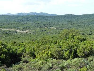Forestazione, in arrivo circa 6 mil di euro per chiudere i piani forestali
