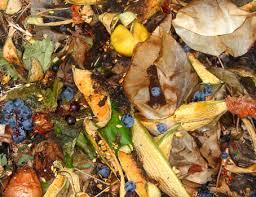"""Gestione rifiuti agricoli, Coldiretti Campania: """"Confermata semplificazione"""""""