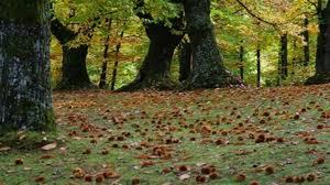 Emergenza fitosanitaria del castagno, Agrinsieme Campania presenta le sue proposte