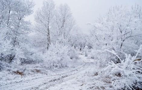 Neve, trattori Coldiretti pronti ad offrire aiuto ai comuni sanniti
