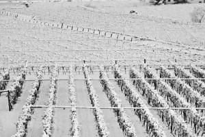 Maltempo, danni ingenti all'agricoltura. Il Sottosegretario De Caro sollecita il Ministro Martina