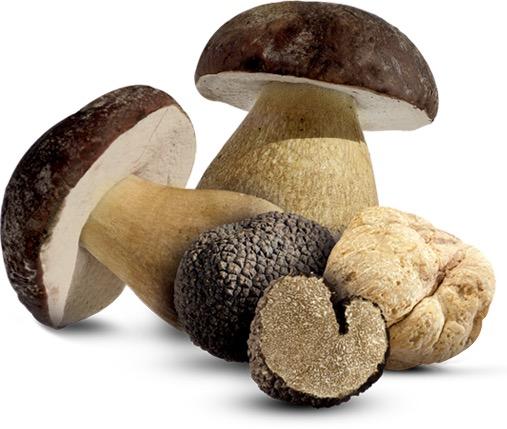 Passano alla Regione le attività amministrative riguardanti funghi e tartufi
