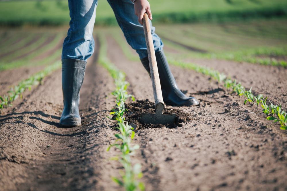 Via al bando Ismea per il primo insediamento. Click Day per contributo pro giovani agroimprenditori