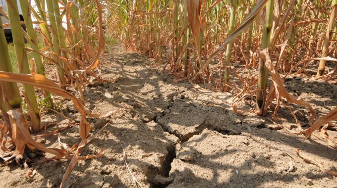 Formalizzata in Regione richiesta riconoscimento stato di calamità naturale a seguito della siccità