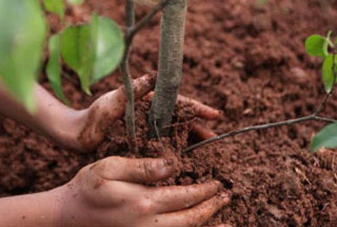 Riforestazione e bonifica montana, via libera agli interventi della Provincia