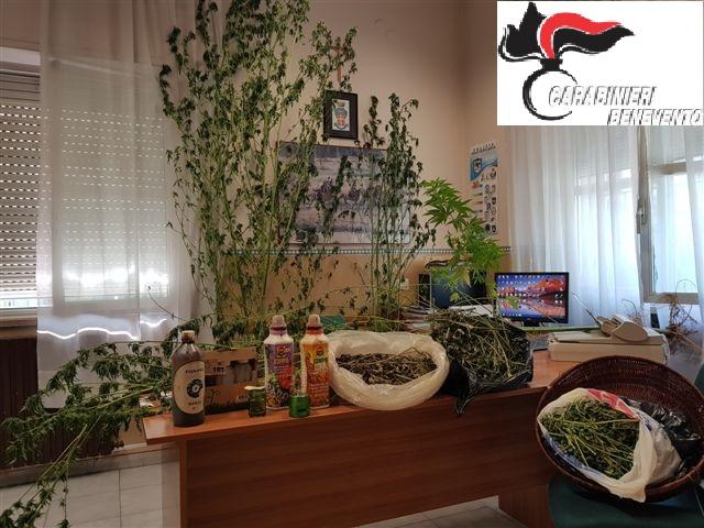 Coltivavano piante di cannabis. Arrestati a San Giorgio del Sannio madre e figlio
