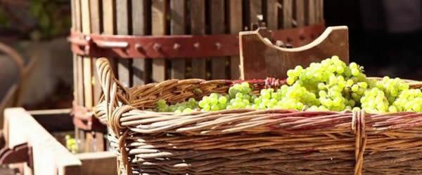L'Unisannio è presente alla Festa dell'Uva di Solopaca con gli aperitivi culturali