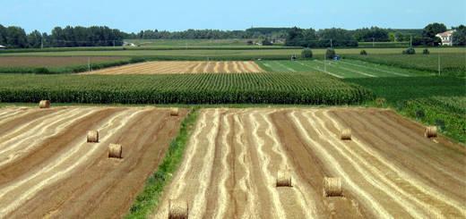 Regione, 140 mln di euro al Piano di Sviluppo Rurale. Mortaruolo: opportunità imperdibile per i giovani