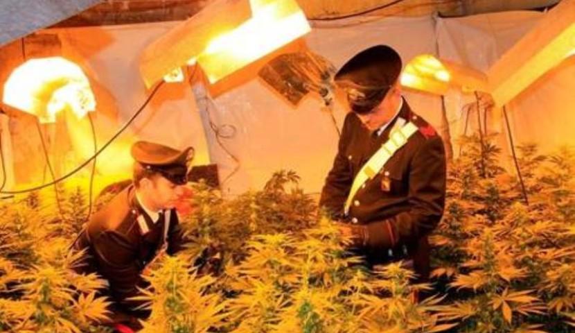 Arpaise, in manette padre e figlio per produzione di marijuana