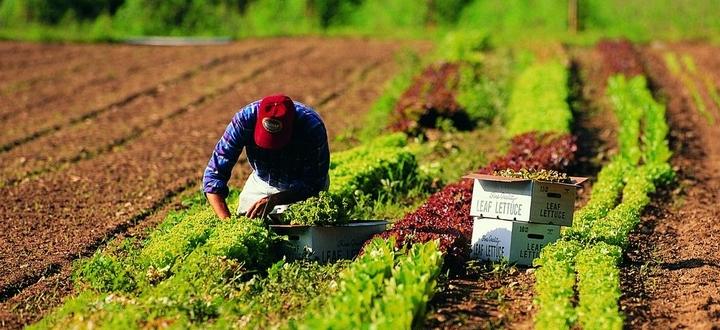 Lavoro, contratto per 1,2 mln di operai agricoli