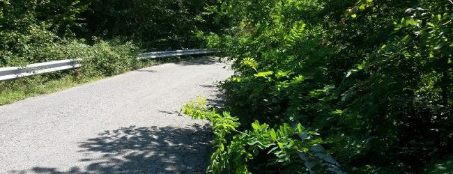 Provincia, 260mila Euro per lo sfalcio della vegetazione sulle strade provinciali