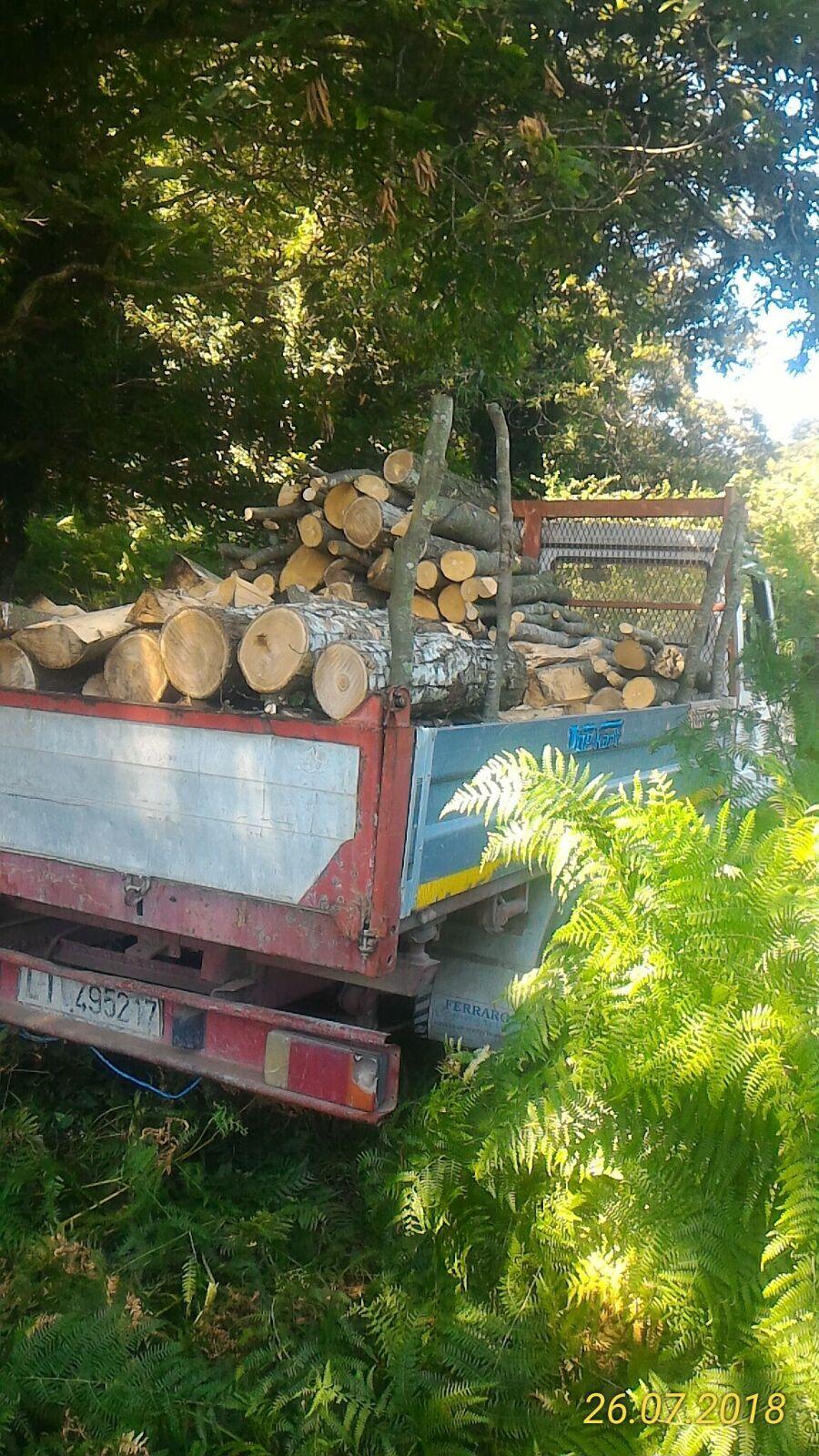 Furto di legna nel parco del Partenio, ladro arrestato dai forestali di Airola e Sant'Agata