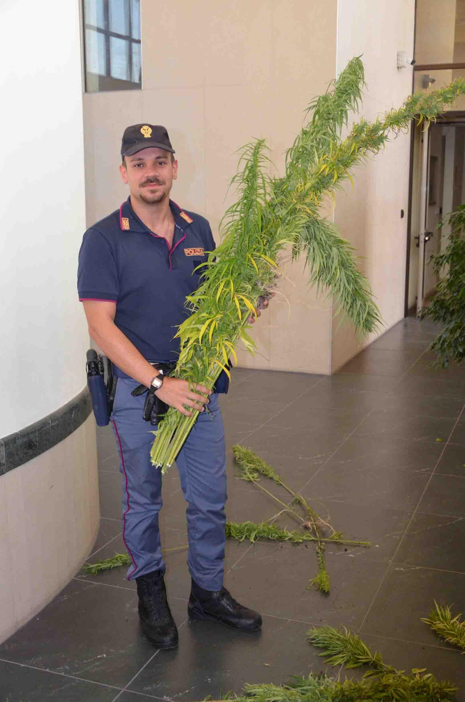 Apollosa, rinvenute e sequestrate dalla polizia alcune piante di marijuana