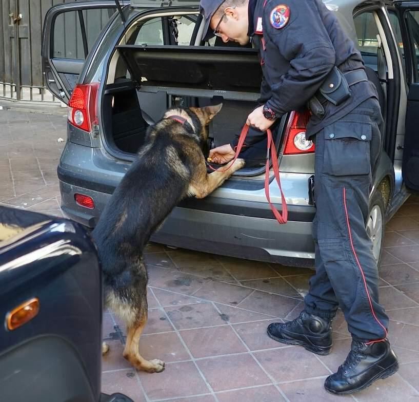 Moiano, nascondeva ordigno esplosivo artigianale e armi. 67enne arrestato dai Carabinieri