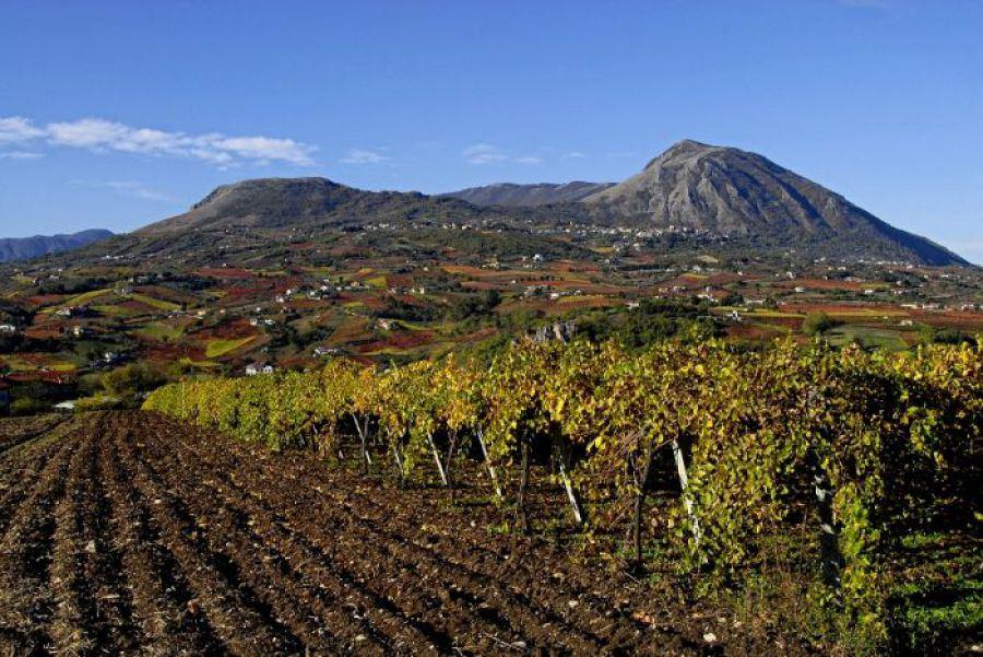 Sarà Benevento, non Napoli, la sede della inaugurazione di 'Sannio Falanghina. Città Europea del Vino 2019'