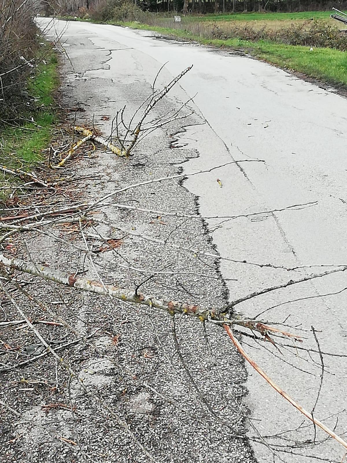 Segnalazione d'intervento su strada Via dei Mercuri pericolosa ed abbandonata al suo degrado
