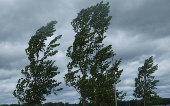 Raffiche di vento, danni a Puglianello