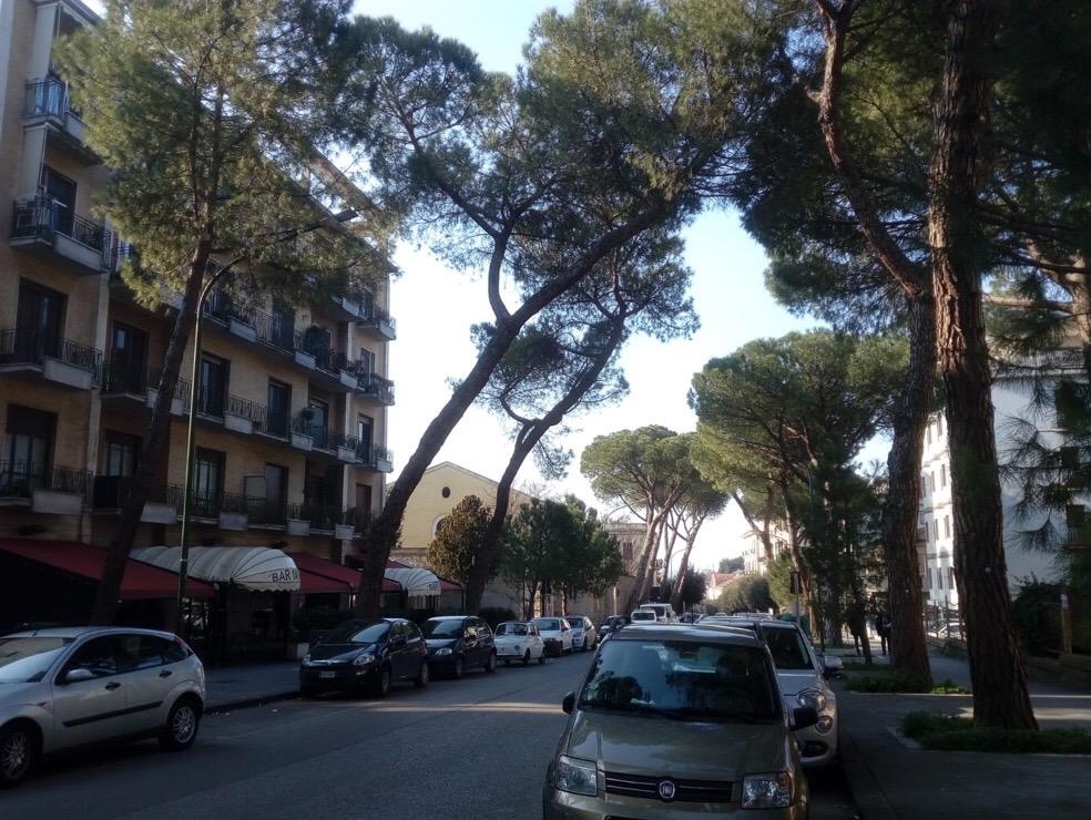 """Altrabenevento: """"Mastella fa abbattere i pini del viale Atlantici ma non fa potare gli alberi al viale Mellusi"""""""