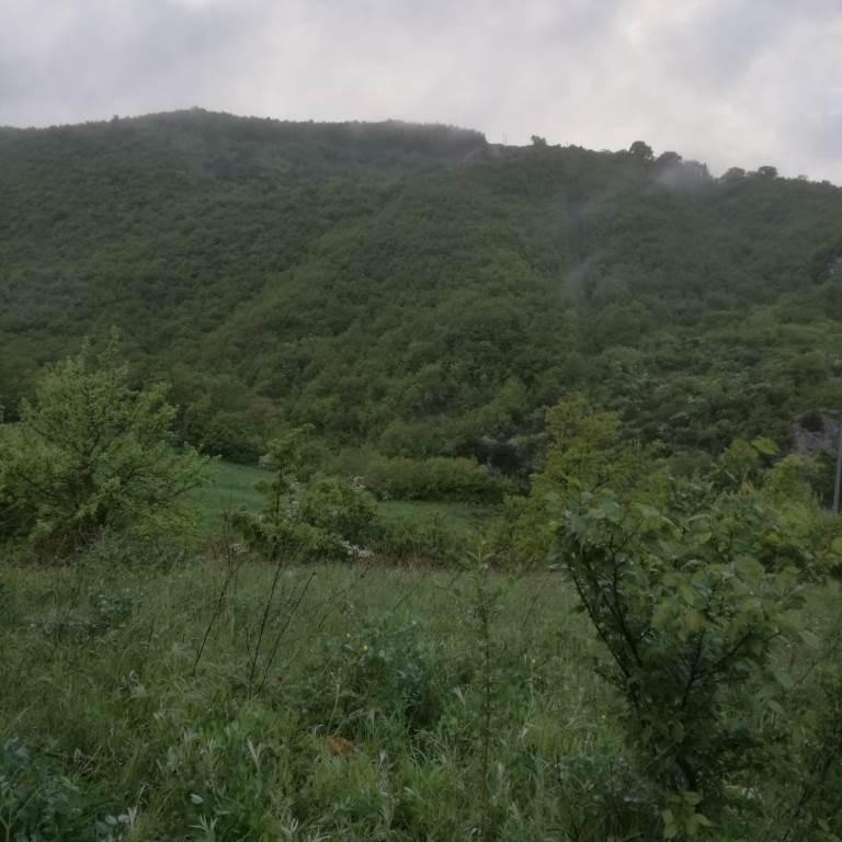 San Bartolomeo in Galdo, ritrovati e messi in salvo coppia dispersa nel bosco