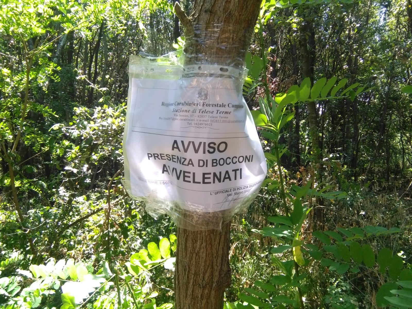 San Salvatore Telesina, esche avvelenate rinvenute dai Forestali sul Monte Pugliano