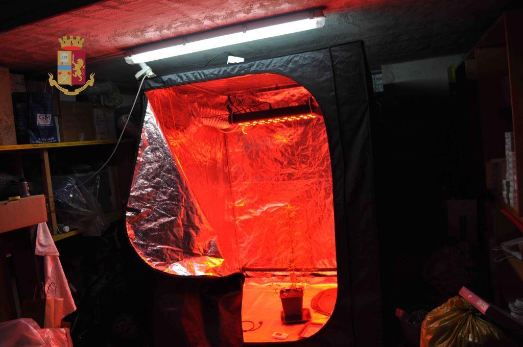 Telese, trasforma proprio garage in una serra per coltivare marijuana. Arrestato