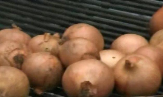 Verso il presidio Slow Food della cipolla di Airola. Venerdì presentazione nella Sala Consiliare