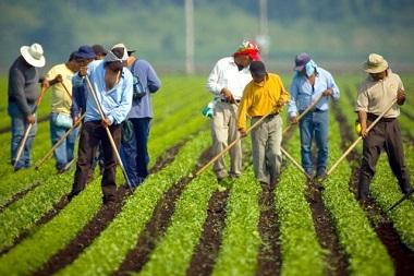 Cercasi lavoratori nei campi; aperti sportelli on line. Molte le candidature giunte alle aziende in Veneto