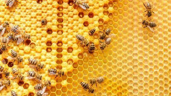 Giornata mondiale delle api, Coldiretti: in Italia cresce il consumo di miele