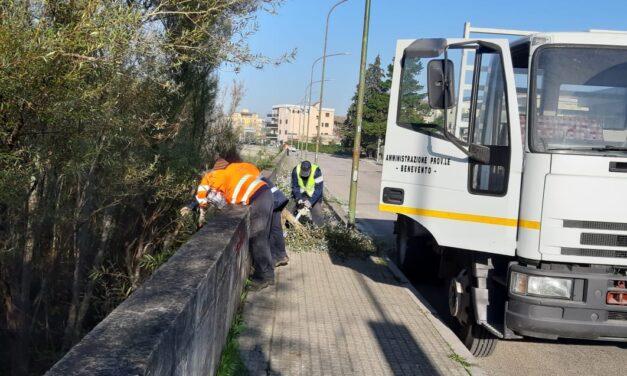 La Forestale ha provveduto a manutenere l'albero del fiume Sabato