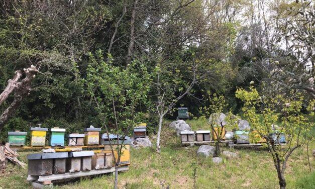 Giornata della Terra: le api, sentinelle dell'ambiente, nel cuore delle 4 AC di EarthBeat