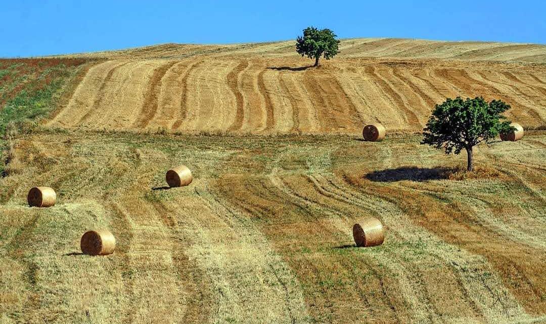Dal Sannio a Siviglia in nome della dieta mediterranea